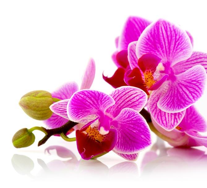 Patricia TRÉANTON : Relaxation méditative par le toucher . Finistère (29) . Le Chemin des Orchidées. La relaxation est un phénomène naturel nécessaire à notre santé. Je vous propose des séances de Relaxologie de pleine conscience ...